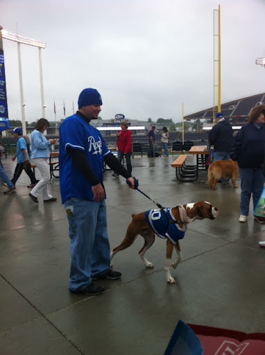 Royals fans- both human and canine come out to support their team on 'Bark at the K' bring your pooch to the game day!