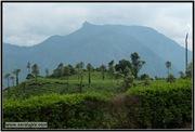 AVV_049__DSC0225-Edit_www.keralapix.com_049
