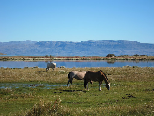 Laguna Nimez - an excellent spot for birdwatching on the shores of Lake Argentina.