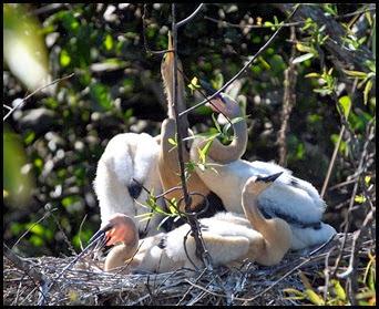 02g - Shark Valley - Ahinga Mom and 4 chicks