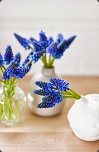 muscari 2 keep it simple keep it fresh blogspot