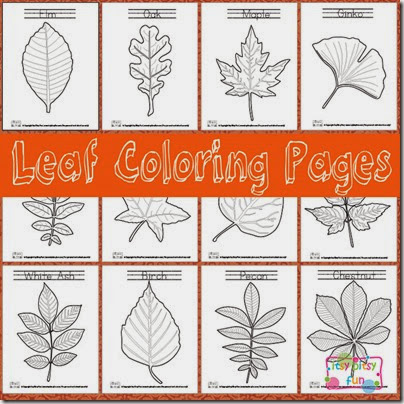 leaf coloring pages - Leaf Coloring Pages Preschool