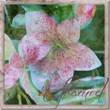 blüte-einer-Hortensie