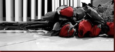 Rosas Rotas