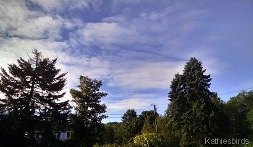 3. 8-14-14 blue skies
