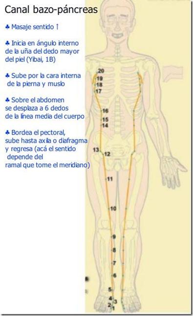 Canal del bazo páncreas explicado
