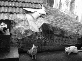 Alvin & the catmunks