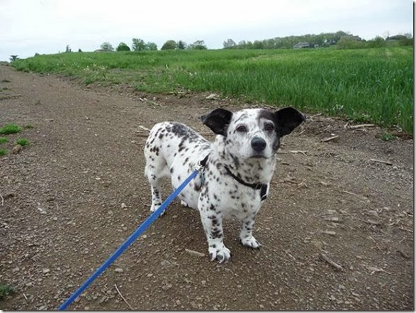 strange-dog-cross-breeds-002