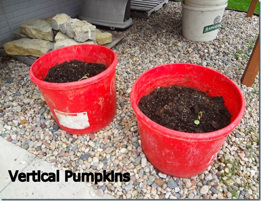 Planting 04282012-2
