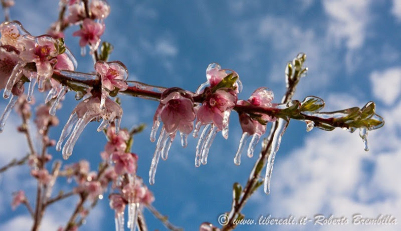 2014-03-3-25_Pesco ghiacciato_Villa di Tirano (35)