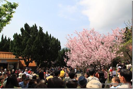 2010陽明山花季-遊客中心前