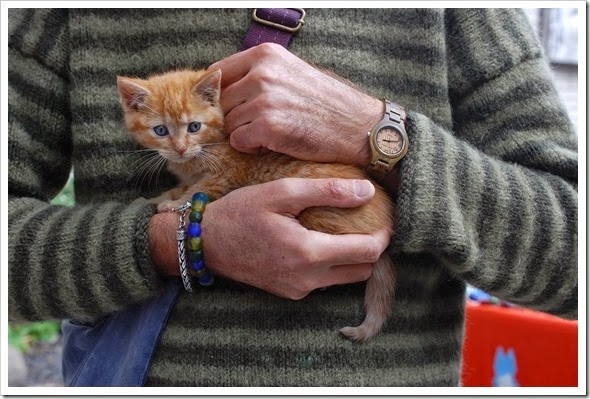 thanksgiving wknd frank kitten