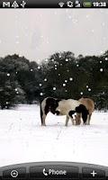 Screenshot of Settling Snow Live Wallpaper