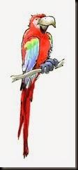 parrot1a