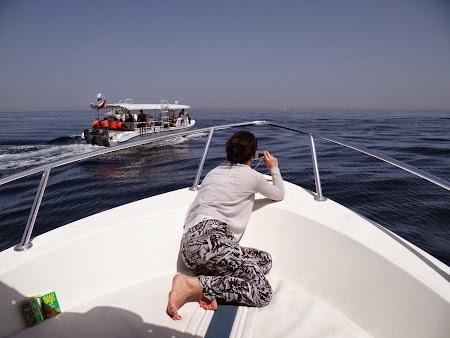 21. La vanatoare de delfini.JPG