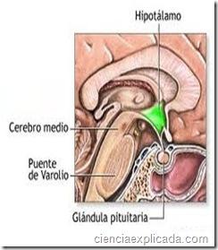 Enfermedades de la Pituitaria