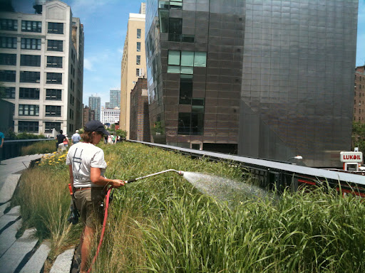 Maeve, a gardener at the High Line, waters various grasses.