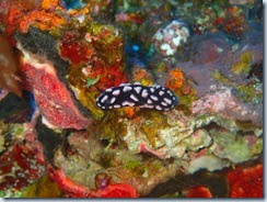 Dive south of Lamen Bay_06 22 14_0010