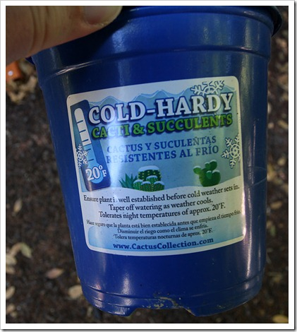 120602_cold_hardy_succulents_label