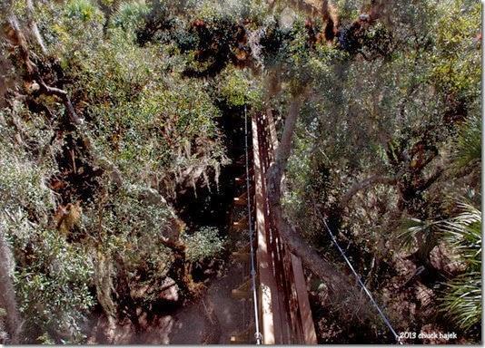 Myakka swing trees140