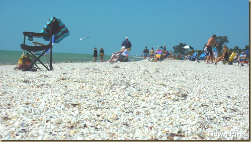 Sanibel Shell and birds_183