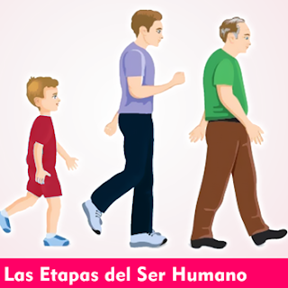 Las Etapas del Ser Humano