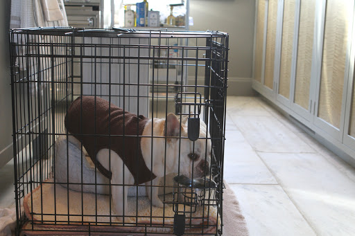 There's nothing wrong with me, so why am I locked up in this crate?