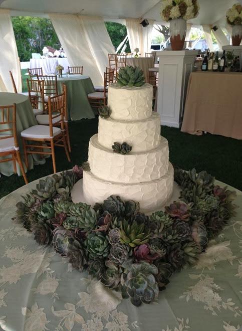 succulents 164626_10151641450201663_910185822_n jackson durham flowers
