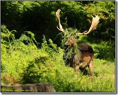 Bradgate Park D300s X14  08-09-2012 13-52-064