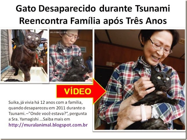 Gato Desaparecido durante Tsunami Reencontra Família após Três