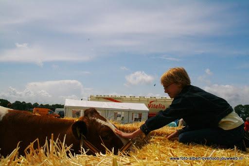 koeien kijken boer martij 18-06-2011 (28).JPG
