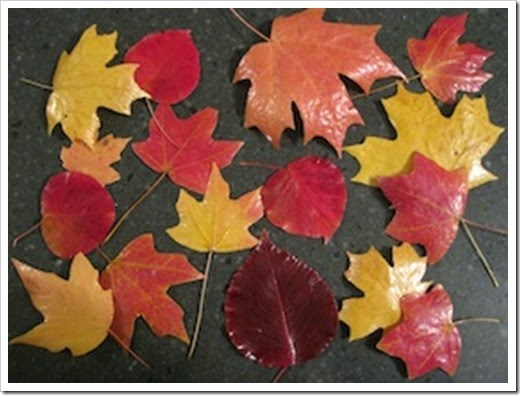 preserve-fall-leaves-done1-280x210