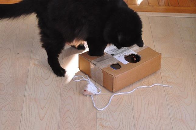 cat_toy2