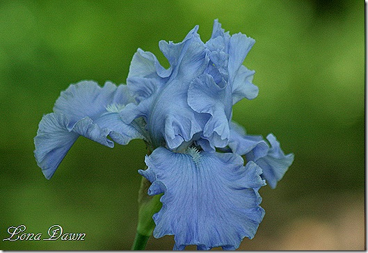 Iris_Monets_Blue