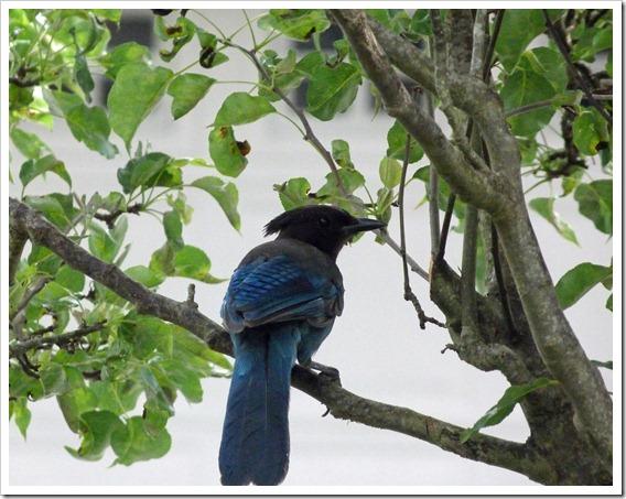 Birdfeeder 20