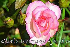 17  - Glória Ishizaka - Rosas do Jardim Botânico Nagai - Osaka
