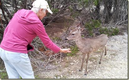 Rockey with deerMedina Lake TT 3-3-13_1