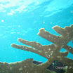 Buck Island Reef - IMGP1275.JPG