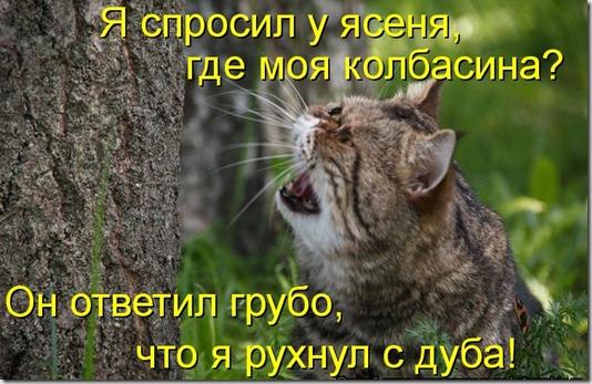 kotomatritsa_r0