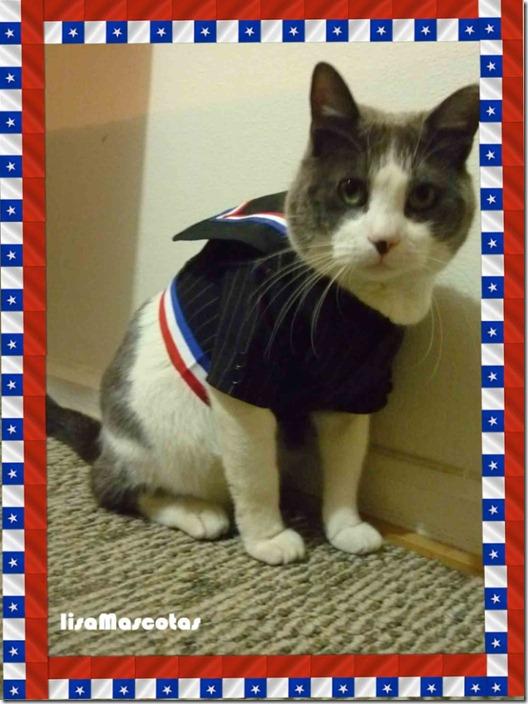 chaqueta-de-huaso-para-gatos-y-perros-talla-xs_MLC-F-3011632592_082012