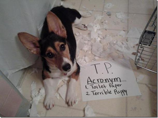 dog-shaming-bad-10