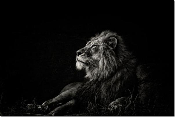 Fotos preto e branco de animais selvagens (8)
