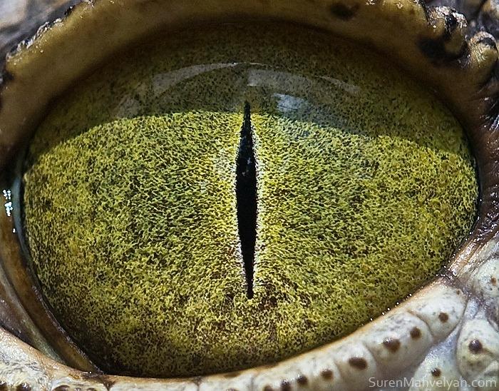 animal-eyes-13