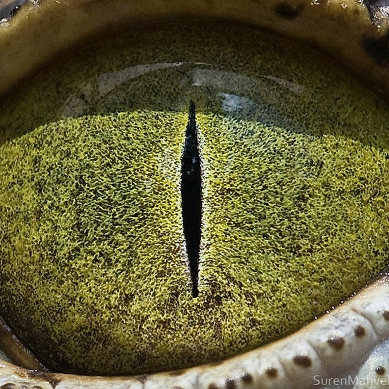 Beautiful Close-Up Pictures of Animal Eyes by Suren Manvelyan