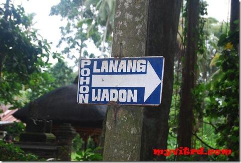 pohon lanang wadon