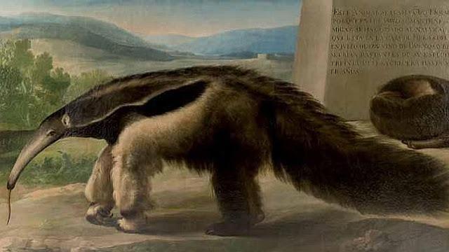 Goya - La osa hormiguera.jpg