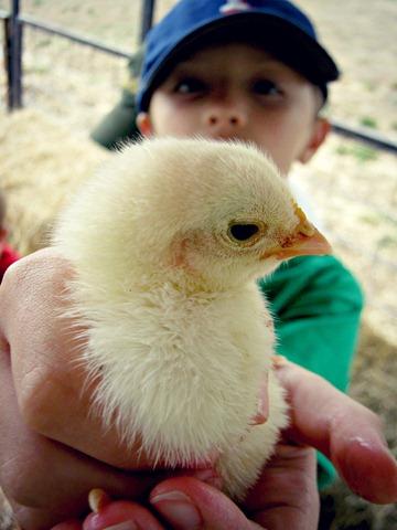 rylan & the chick