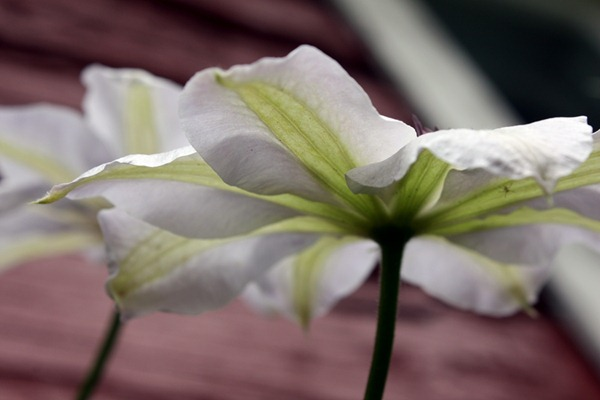 blomstrer1