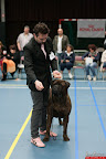 20130510-Bullmastiff-Worldcup-0847.jpg
