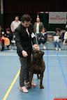 20130510-Bullmastiff-Worldcup-0847.jpg
